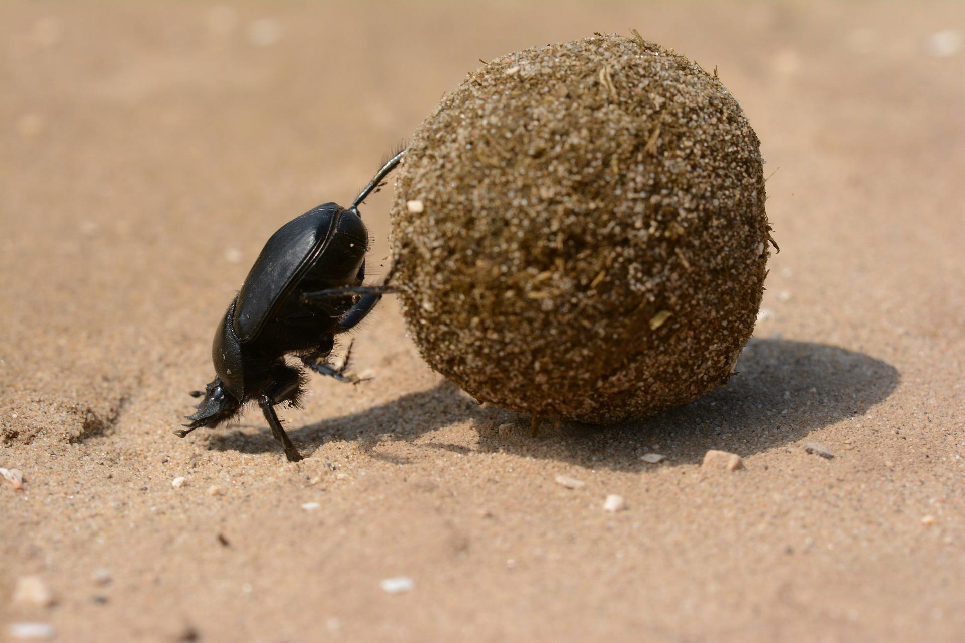 scarabee perseverance